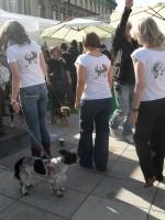 moje psiaki na koszulkach